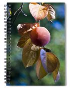 Persimmon Tree Spiral Notebook