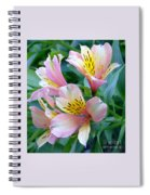 Peruvian Lily Of The Incas Spiral Notebook