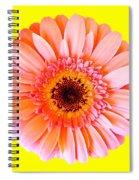 Petal Pop Designs Spiral Notebook