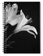 Petals' Light Spiral Notebook