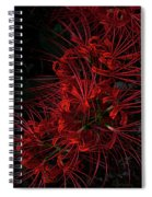 Petals Of Fireworks Spiral Notebook