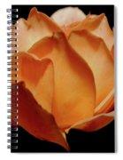 Petals Of Orange Sorbet Spiral Notebook