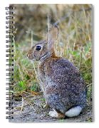 Peter Cottontail Spiral Notebook