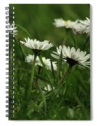 Petite Daisies 5 Spiral Notebook