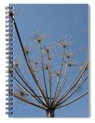 Petite Parasols Spiral Notebook