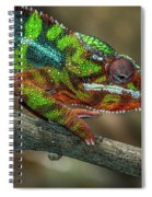 Ambilobe Panther Chameleon Spiral Notebook