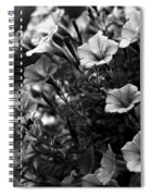 Petunias 1 Black And White Spiral Notebook