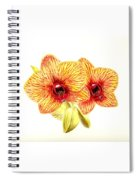 Phalaenopsis Orchid Spiral Notebook