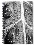 Philodendron Rain - Bw Spiral Notebook
