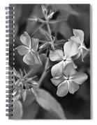Phlox Divaricata Bw Spiral Notebook