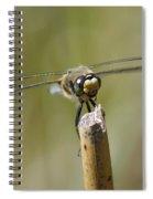 Photogenic Dragon Spiral Notebook