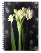 Photograph Of Narcissus Erlicheer A White Flower Spiral Notebook