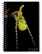 Phragmipedium Richteri Orchid Spiral Notebook