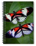Piano Key Butterfly's Spiral Notebook