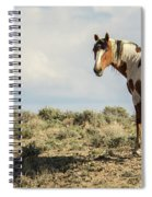 Picasso Looks Over Sand Wash Spiral Notebook