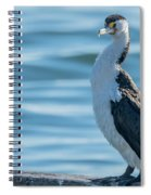 Pied Cormorant On Old Wharf Spiral Notebook
