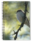 Pied Flycatcher 1 Spiral Notebook
