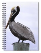 Pier Pelican Ponce Inlet Spiral Notebook