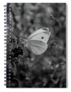 Pieris Rapae Spiral Notebook