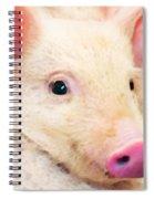 Pig Art - Pretty In Pink Spiral Notebook