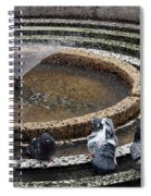 Pigeons Are In The Fountain Refreshes Spiral Notebook