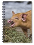 Piglet Eating Hay Spiral Notebook