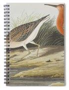 Pigmy Curlew Spiral Notebook