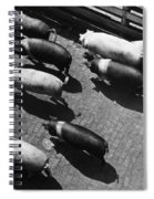 Pigs Being Corralled Spiral Notebook