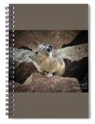Pika - Weminuche Wilderness - Colorado Spiral Notebook