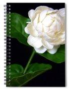 Pikake Spiral Notebook