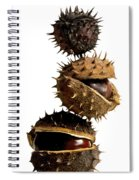 Pile Of Chestnuts Spiral Notebook