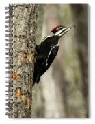 Pileated About To Take Flight Spiral Notebook