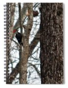 Pileated Billed Woodpecker Spiral Notebook