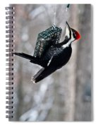 Pileated Billed Woodpecker Feeding 1 Spiral Notebook