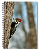 Pileated Billed Woodpecker Pecking 1 Spiral Notebook