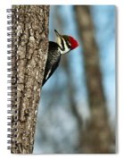 Pileated Billed Woodpecker Pecking 2 Spiral Notebook