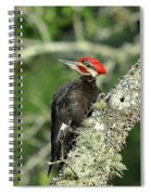 Pileated Perch Spiral Notebook