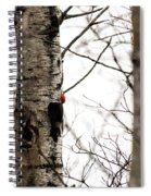 Pileated Spiral Notebook