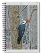 Pileated Woodpecker - Dryocopus Pileatus Spiral Notebook