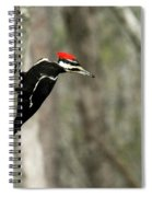 Pileated Woodpecker Looking For A Perspective Mate Spiral Notebook
