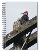 Pileated Woodpecker On A Power Pole Spiral Notebook