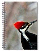 Pileated Woodpecker Up Close Spiral Notebook