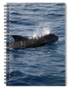 Pilot Whale 6 Spiral Notebook
