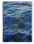 Pilot Whale 8  Spiral Notebook