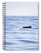 Pilot Whales 2 Spiral Notebook