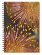 Pin Cushion Protea Spiral Notebook