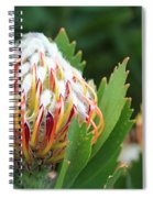 Pincushion Protea Spiral Notebook