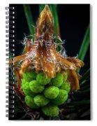Pine Cone Focus Stack Spiral Notebook
