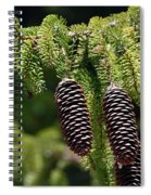 Pine Cones On The Bough Spiral Notebook