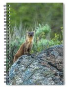 Pine Marten With Attitude Spiral Notebook